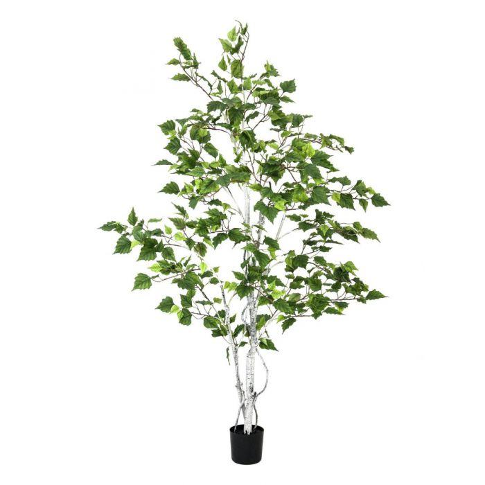 EUROPALMS Berkenboom, kunstplant, 150cm
